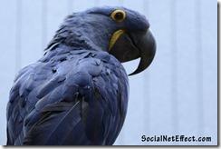 blue-parrot-socialneteffect